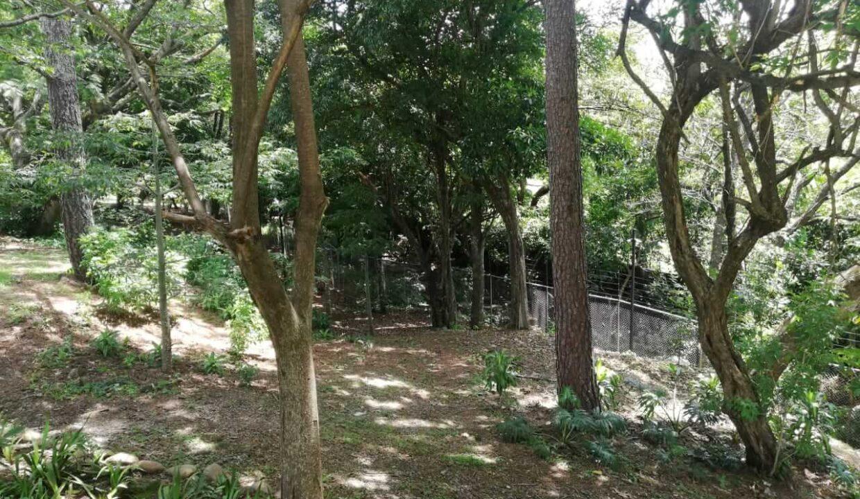 venta-de-casa-condominio-bosque-dorado-piedades-de-santa-ana-premier-propiedades (4)